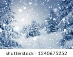charming white spruces on a... | Shutterstock . vector #1240675252