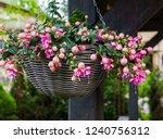 Beautiful Fuchsia Flowers...