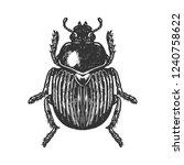 Scarab Beetle Engraving Vector...