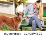 Stock photo beautiful girl with his shetland sheepdog dog sitting and posing in front of camera on wooden bench 1240894822
