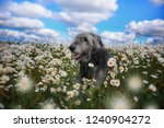 Happy Dog In Flowers. The...