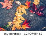 fallen colorful maple leaves on ... | Shutterstock . vector #1240945462