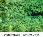green grass at the bottom of... | Shutterstock . vector #1240952245