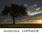 solitary tree at sunset   Shutterstock . vector #1240966228