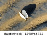 seashell on the seabed in the... | Shutterstock . vector #1240966732