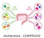 poster of intestinal flora gut... | Shutterstock .eps vector #1240992232