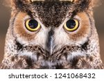 close up on great horned owl... | Shutterstock . vector #1241068432