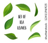 tea leaves with drops isolated... | Shutterstock .eps vector #1241196925