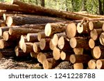 bunch of felled and cut trees.... | Shutterstock . vector #1241228788