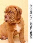 Puppy Dog Breed Dogue De...