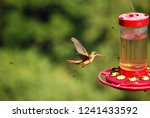 perfect shot of colibri at mid... | Shutterstock . vector #1241433592
