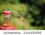 perfect shot of colibri at mid... | Shutterstock . vector #1241433595