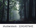 Road In Fog Forest. Taken In...