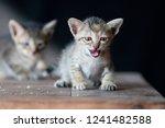 Tiny Kitten Looking At Camera