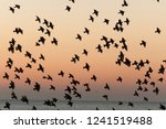 Flock Of Birds Silhouette In...