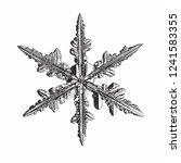 snowflake isolated on white... | Shutterstock .eps vector #1241583355