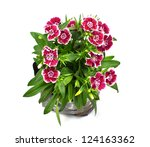 Nursery Bags With Dianthus...