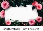 camellia flowers bloom... | Shutterstock . vector #1241737645