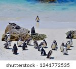 colony of africa penguins with...   Shutterstock . vector #1241772535