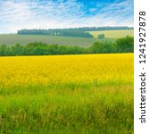 blossoming rapeseed field and... | Shutterstock . vector #1241927878