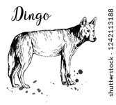 hand drawn sketch style dingo... | Shutterstock .eps vector #1242113188