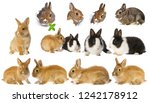 Stock photo rabbits set collection 1242178912