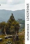 exotic vegetation on hill   Shutterstock . vector #1242292465