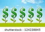 Money Garden With Dollar Plants.