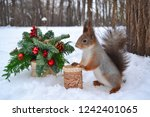 Squirrel With Christmas...