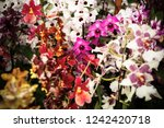 beautiful colorful pink ground... | Shutterstock . vector #1242420718