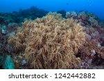 a large colony of flexible... | Shutterstock . vector #1242442882