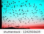 groups of birds flying above... | Shutterstock . vector #1242503635