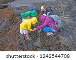 family exploring the tidepools... | Shutterstock . vector #1242544708