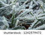 hoarfrost on the grass. ice... | Shutterstock . vector #1242579472