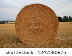 straw roll in harvested field... | Shutterstock . vector #1242580675