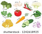 a collection of hand drawn... | Shutterstock . vector #1242618925