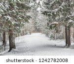 coniferous forest in the snow | Shutterstock . vector #1242782008