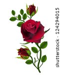 Stock vector three dark red roses isolated on white 124294015