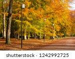 empty lane in a public park on... | Shutterstock . vector #1242992725