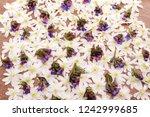 snow on snowdrop flower in...   Shutterstock . vector #1242999685