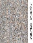 seamless bark tree tileable... | Shutterstock . vector #1243036012