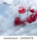 Viburnum Berries Covered With...