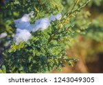photo images of cold ice on the ... | Shutterstock . vector #1243049305
