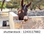 bikaner  india   november 24 ... | Shutterstock . vector #1243117882
