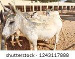 bikaner  india   november 24 ... | Shutterstock . vector #1243117888