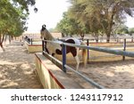 bikaner  india   november 24 ... | Shutterstock . vector #1243117912