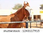 bikaner  india   november 24 ... | Shutterstock . vector #1243117915