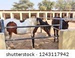 bikaner  india   november 24 ... | Shutterstock . vector #1243117942