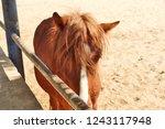 bikaner  india   november 24 ... | Shutterstock . vector #1243117948