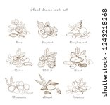 collection with almond ... | Shutterstock . vector #1243218268